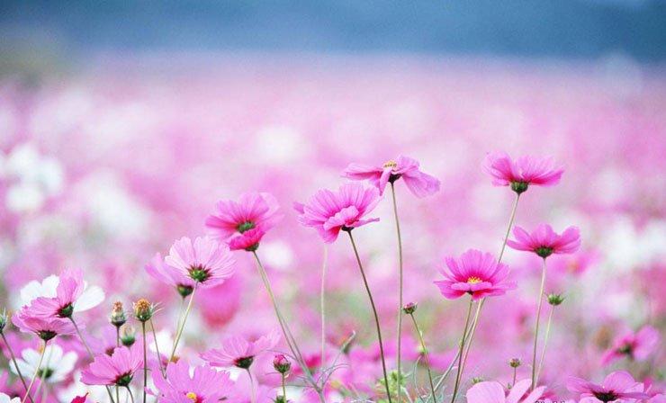 Những bài thơ ngắn hay về mùa xuân bất hủ